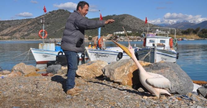 'Pelikan Abbas' Gazipaşa  Limanının maskotu oldu