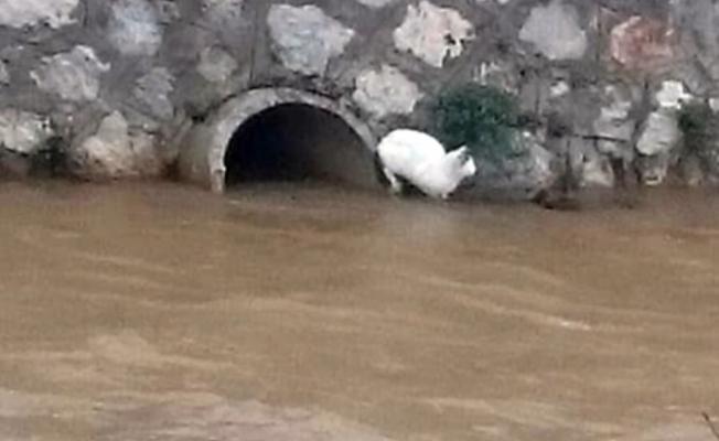 Kedi boğulmaktan  son anda kurtarıldı