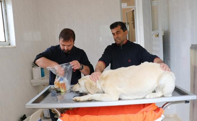 Sokak hayvanları sağlık kontrolünden geçirildi