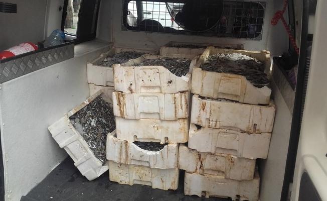 Alanya'da 400 kilo bozuk balık imha edildi