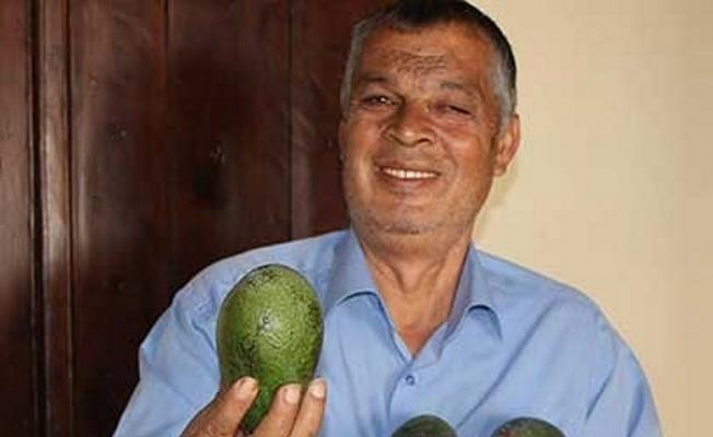 Enerji için avokado yiyin