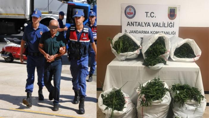 Jandarma 32 kilogram esrar ve 617 kök Hint keneviri ele geçirdi