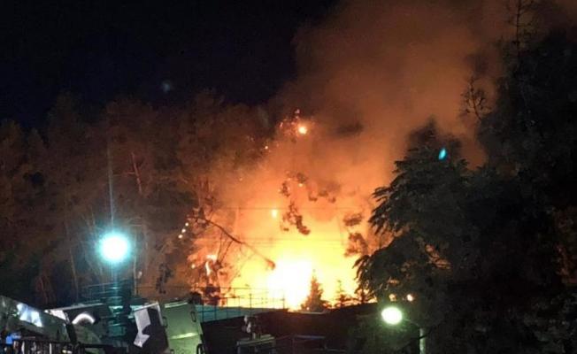 Devrilen çam ağaçları  yangına sebep oldu