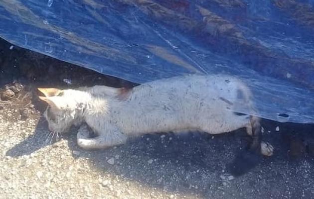 Alanya'da kedi donarak can verdi