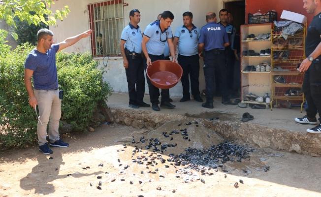 Antalya Büyükşehir Belediyesi midyecilere göz açtırmıyor