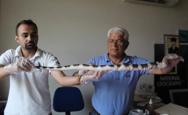 Balıkçıları kortutan av! İlk kez Antalya'da göründü