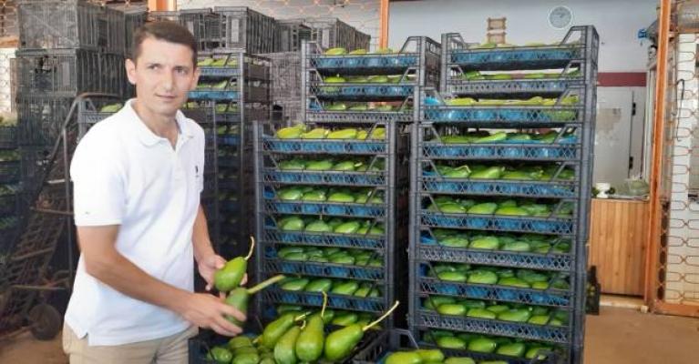 Alanya Avokadosu dünyaya açılmaya devam ediyor