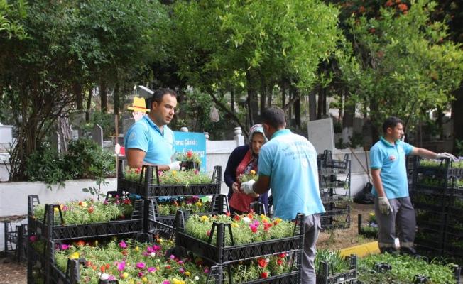 Alanya Belediyesi 55 bin çiçek dağıtacak