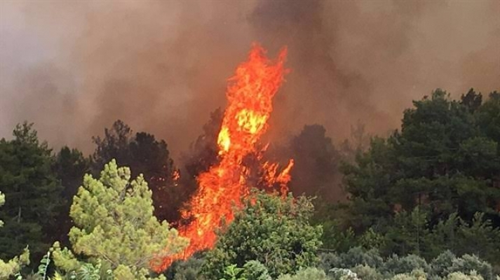 Alanya'da orman yangını paniği!
