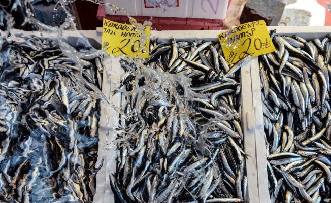 Balıklar tezgahlara serildi