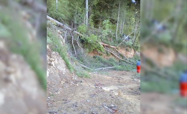 61 yaşındaki adam oğlunun kestiği ağacın altında kalarak can verdi
