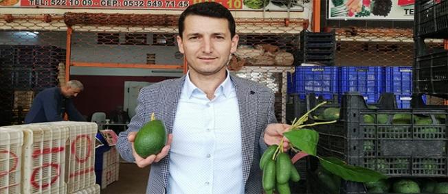 'Alanya'da avokadoya talep çok ama ürün yeterli değil'