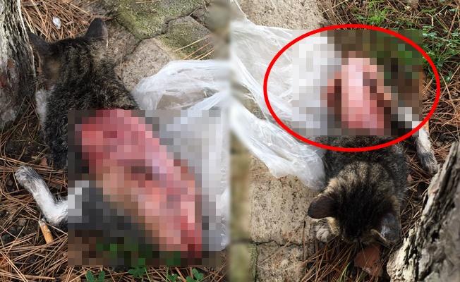 Alanya'da o kedi öldü!