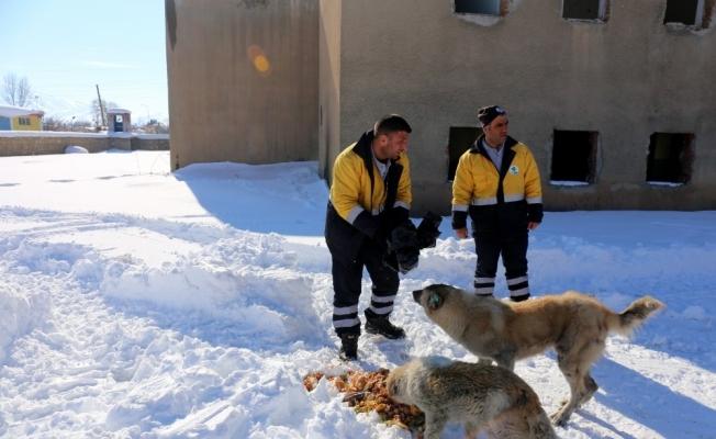 Gürpınar Belediyesi sokak hayvanlarını unutmadı