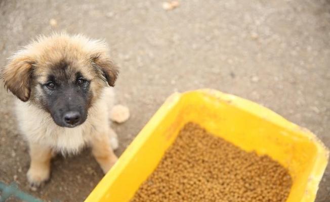Bayburt'ta sokak hayvanları için mama ve su bırakıldı