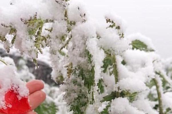 Taşköprü'ye Mayıs ayında kar yağdı