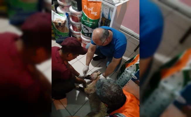 Kazada yaralanan köpek tedavi edildi