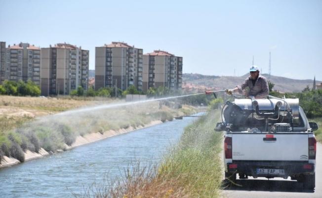 Aksaray Belediyesi larva ve haşerelere karşı ilaçlama yapıyor