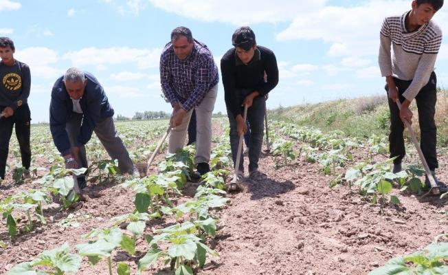 """Başkan Koçak: """"Tarım işçileri olmazsa tarım olmaz"""""""