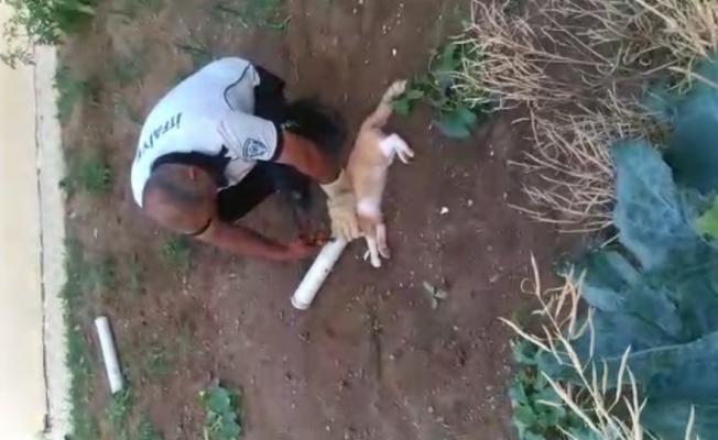 Su borusuna kafası sıkışan kedinin imdadına itfaiye yetişti