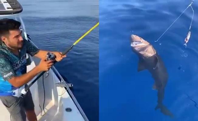 Amatör balıkçının oltasına köpek balığı takıldı