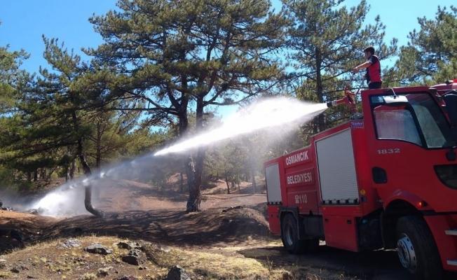 Osmancık'ta orman yangını