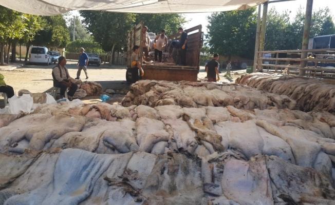 Sarıgöl'de THK'na 6 bin 225 deri bağışlandı