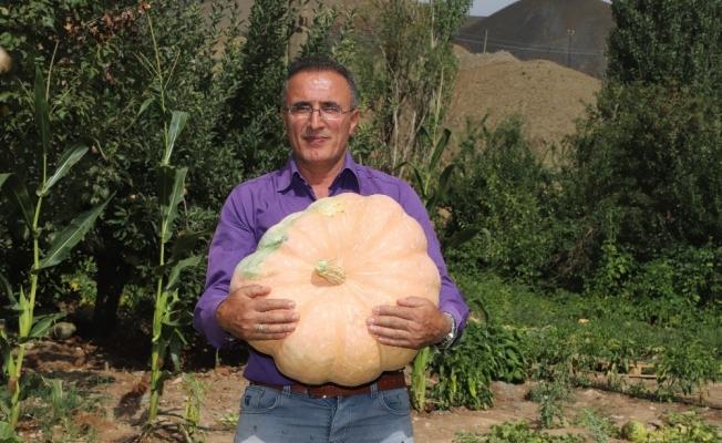 Hakkari'de 45 kiloluk bal kabağı yetiştirildi