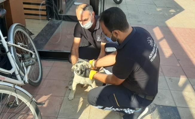 Sokak hayvanları sağlık kontrolünden geçiriliyor