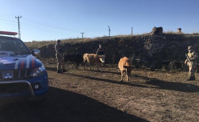 Jandarma çalınan hayvanları sahiplerine teslim etti