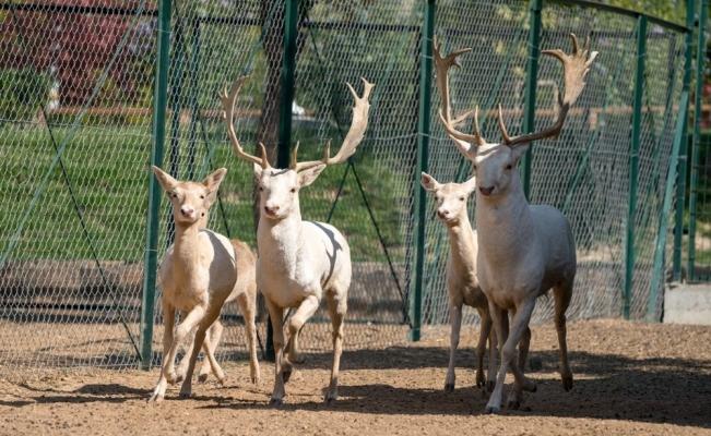 Malatya hayvanat bahçesi kapılarını ziyaretçilerine açıyor
