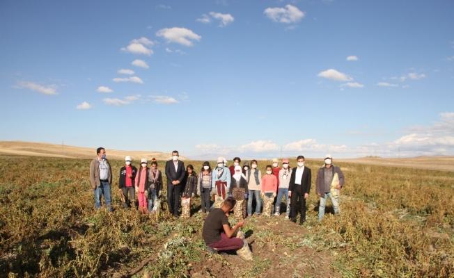 Malazgirt'te ilk defa ekilen patates çiftçiye umut oldu