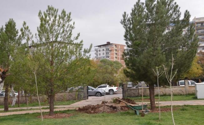 Ilısu Barajı altında kalan ağaçlar Kurtalan'da hayat bulacak