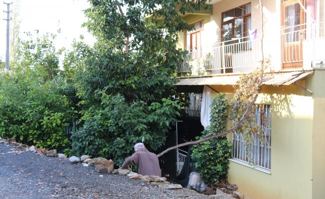 Gazipaşa'da avokado ağacı inadı canından ediyordu