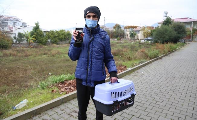 Gazipaşa'da mola yerinde kaybettiği kedisi için 400 kilometre geri geldi