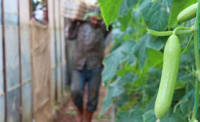 Gazipaşa'da tarımda siparişe göre üretim dönemi