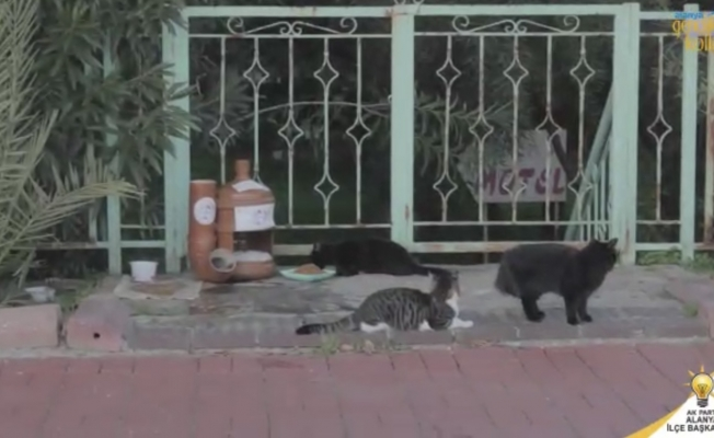 Alanya Ak Gençlik sokak hayvanlarının yanında