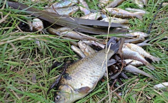 Antalya'da balık ölümleriyle ilgili 10 işletme kapatıldı