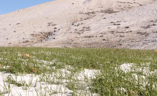 Büyükşehirin Elmalı ve Korkuteli'deki ata tohumları çimlendi