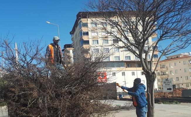 Cadde ve yollardaki ağaçların budanmaya devam ediliyor
