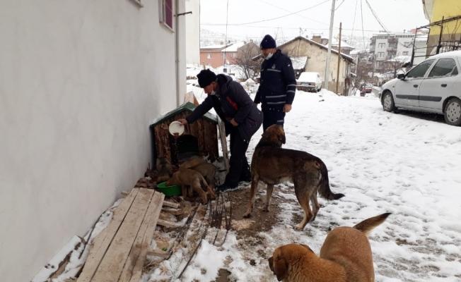 Emet Belediyesi'nden sokak hayvanlarına su ve yiyecek desteği
