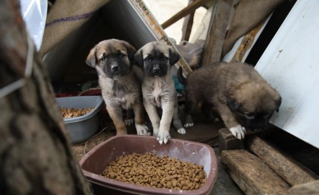 Fatsa'da sokak hayvanları yalnız değil