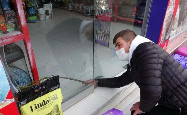Hırsız 100 liralık tasmayı çalmak için bin 500 liralık çamı kırdı