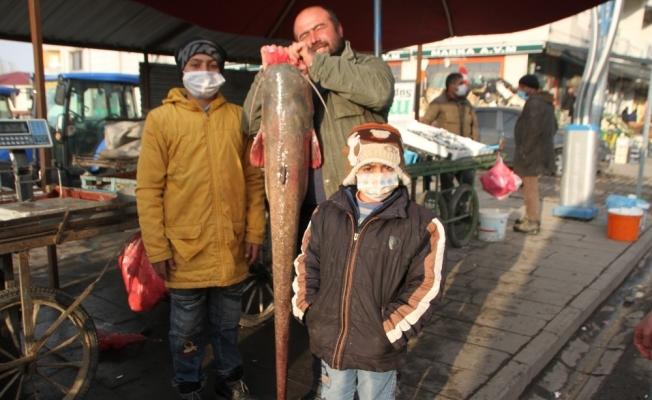 Murat Nehrinde 1,5 metre boyunda balık avladı