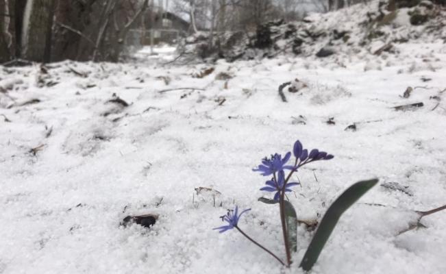 Bozdağ'da kar yağışı