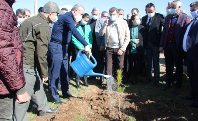 Diyarbakır hipodromu 44 bin ağaçla yeşillendirildi