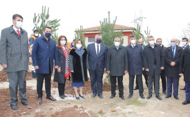 Gaziantep'te 330 adet karaçam ağacı toprakla buluştu