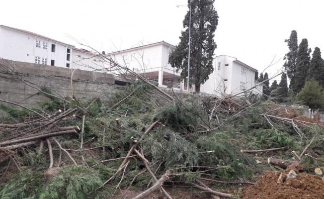 Hastane bahçesindeki ağaçlar kesildi