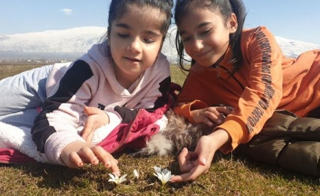 (Özel) Bitlis'te kardelen ve çiğdemler çiçek açtı