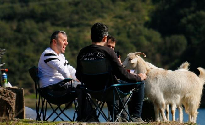 (ÖZEL)İstanbul'da karnı acıkan keçiler gülümsetti